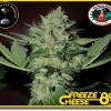 Freeze Cheese 89